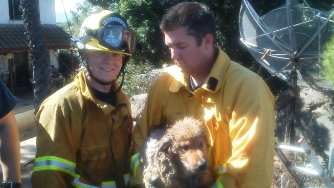 Fire Crews Use Cooking Oil to Free Dog Trapped in Boulder