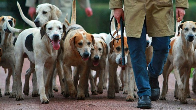 Gov. Signs Bill That Bans Hunting With Dogs