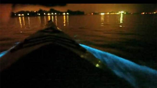 Kayakers Capture Red Tide on Video