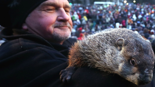 """Punxsutawney Phil """"Indicted"""" Over Early Spring Forecast"""