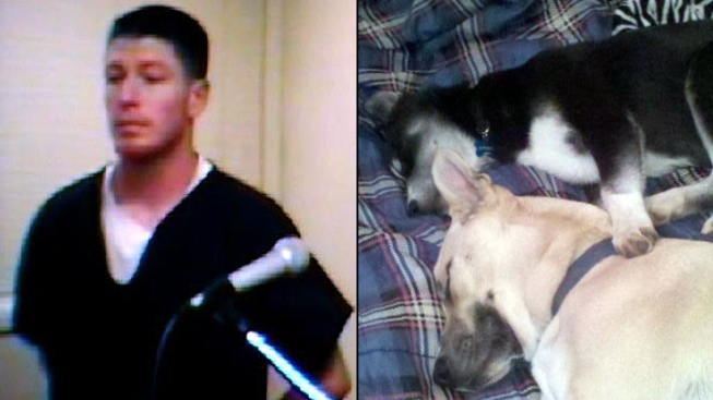 "Pup's Death Tied to Vet's ""War Trauma"": Family"