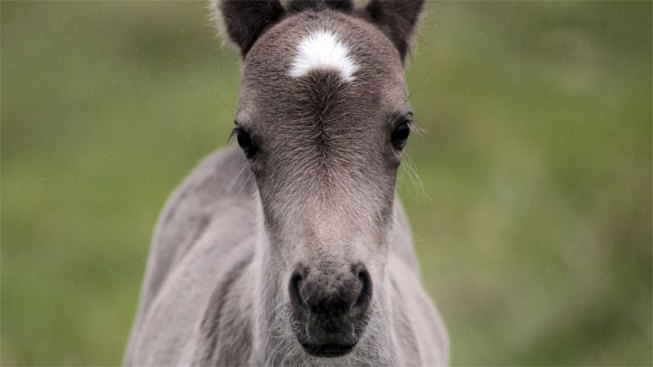 Pony Rides & Petting Zoos at Zoomars