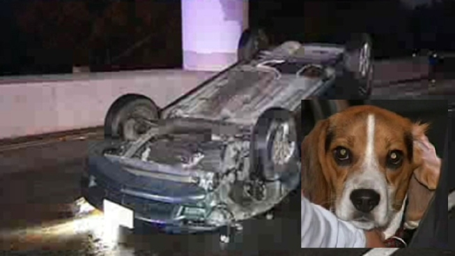 Driver, Dog Survive Rollover Crash