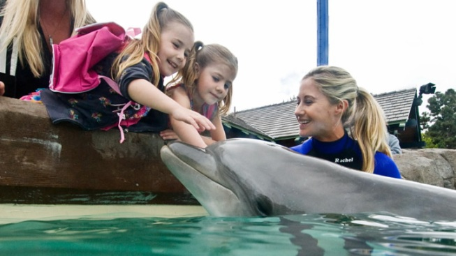 Dolphin Interaction Re-Opens at SeaWorld