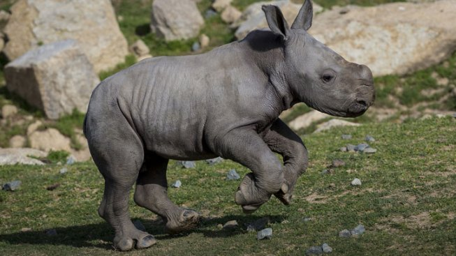 San Diego Helps Rhino Group Exceed Goal