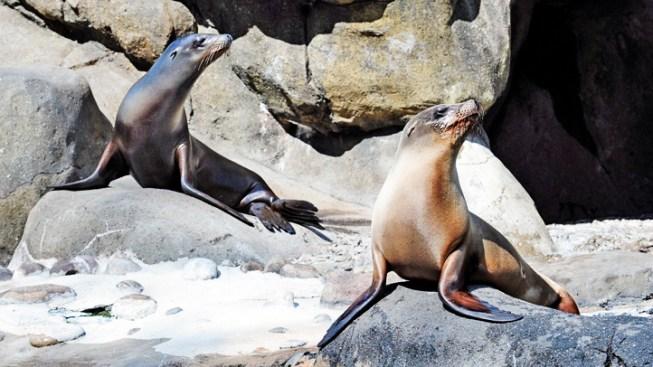 Oceanside Harbor: When Sea Lions Invade