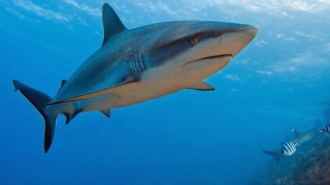 'Shark Week' Makes Life Tough for Researchers