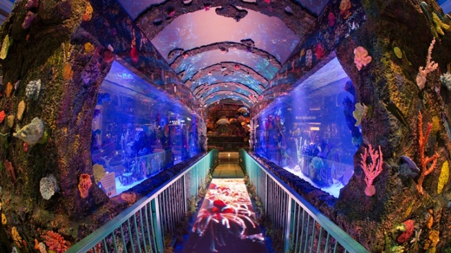 Bellagio Gardens: Go Under the Sea