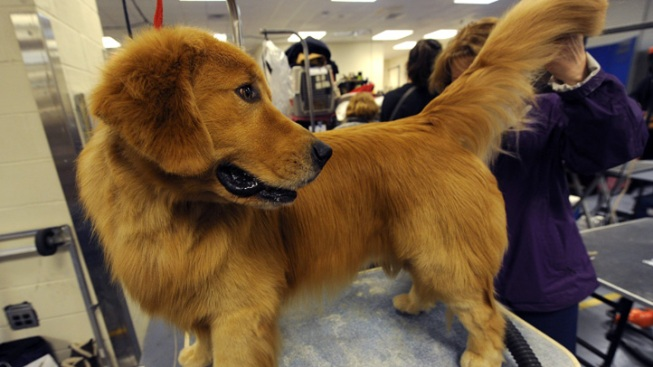 Committee Approves Pet Grooming Bill