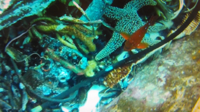 Video Confirms Final Location for Aegean Wreck