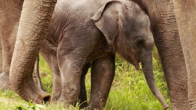Safari Park Elephants May Move to Tucson