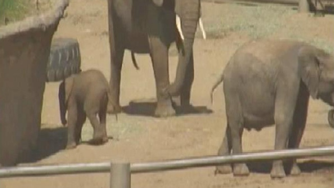 Safari Park Welcomes Baby Elephant