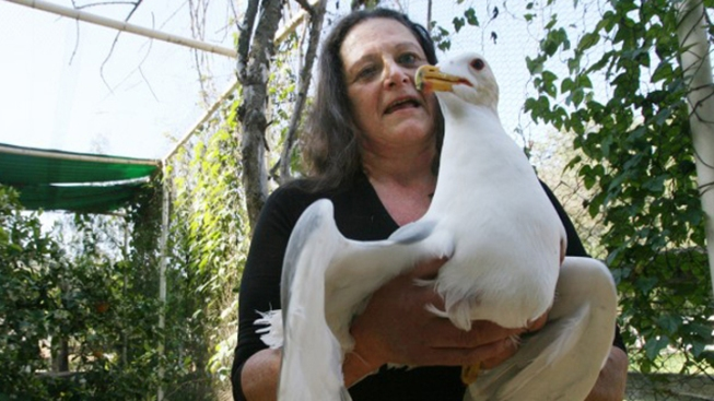 Rescued Birds to be Handed Over to State