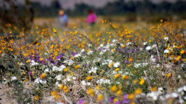 Anza borrego go time for bloom time nbc 7 san diego chargers make unexpected kicking change mightylinksfo