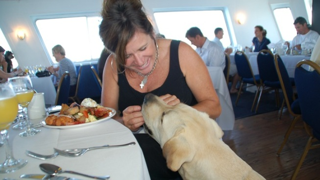 Waggers and Waves: Bow Wow Brunch Cruise