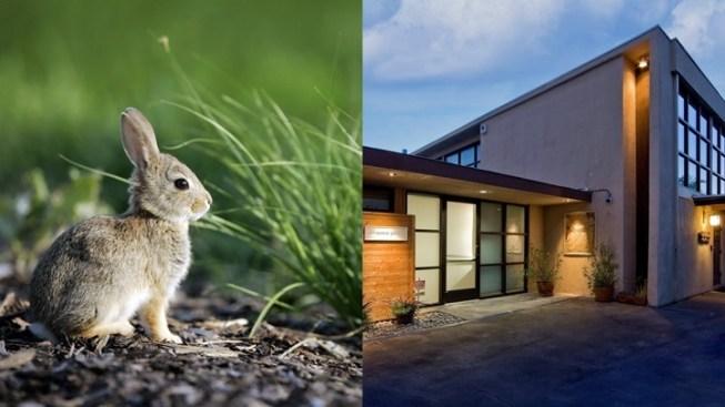 Grand 'Hoppenin'': New Bunny Museum