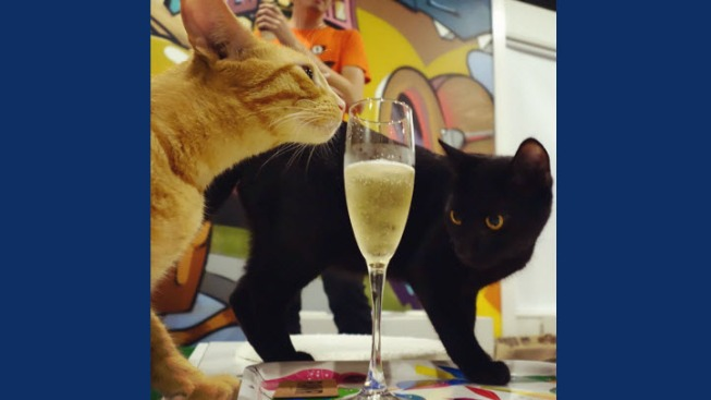 America's First Cat Cafe Opens in Oakland