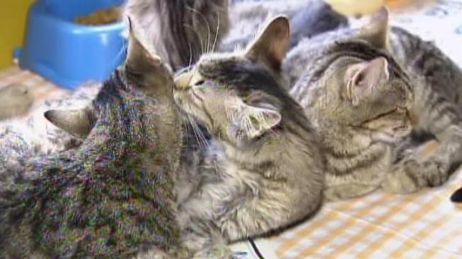 80 Cats Rescued from Woman's Home