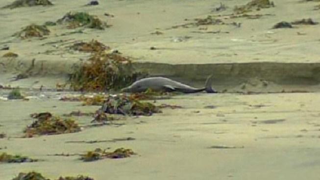Dolphin Found Dead in La Jolla Ditch