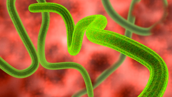 Sorrento Valley Lab's Ebola Drug Shipped to Liberia