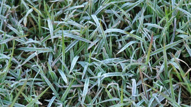 Chilly Temps Threaten Local Crops