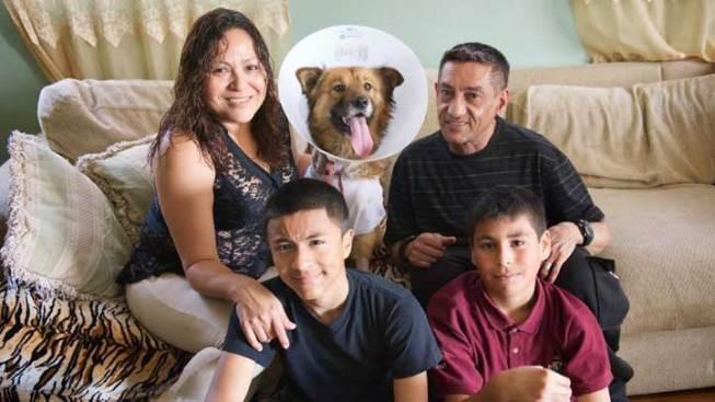 Hero Dog Returns Home After Taking Bullet for Family