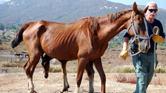 22 Horses, 8 Dogs Seized from Ramona Ranch