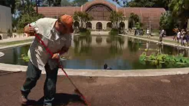 Lily Pond Repairs Near Completion: Mayor