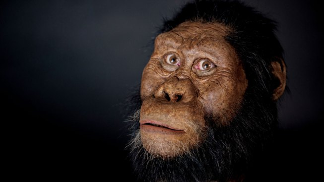 Ethiopian Fossil Reveals Face for Ancestor of Famed 'Lucy'
