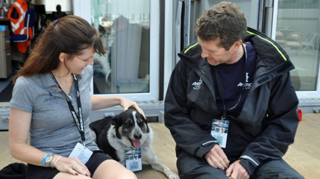 America's Cup Pup Lost, Then Found
