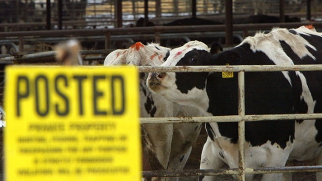 USDA Confirms Mad Cow Disease in California