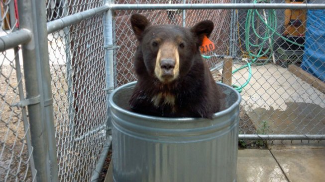Meatball the Bear to Get New Neighbor at San Diego Sanctuary