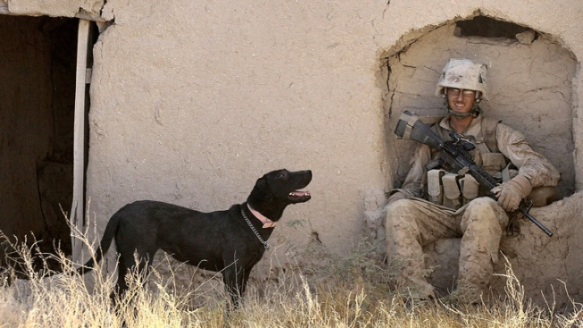 Dogs on Military Duty