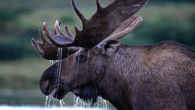 Principal to be Replaced After Students Tricked Into Eating Moose Feces