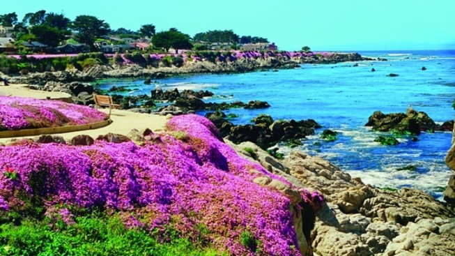 Wowza: Pacific Grove's Magic Carpet