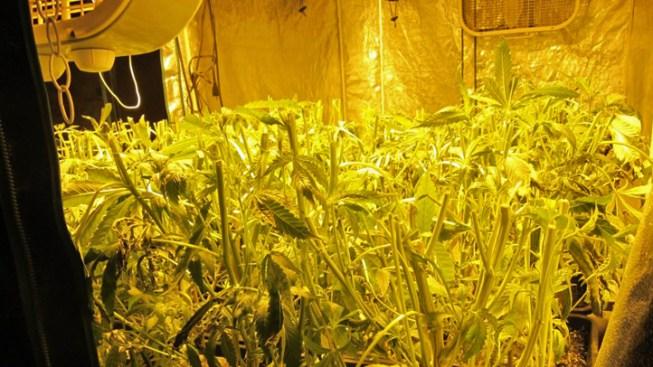 Deputies Discover Indoor Pot Farm in Ramona