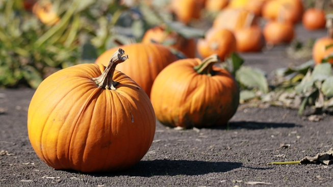 For a Fall-Filled Day: Pumpkin Patch and Restaurant Pairings