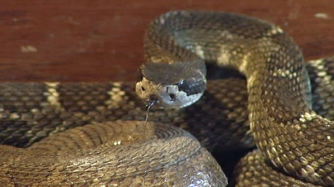 Nearly 100 Snakes Seized From Ohio Home
