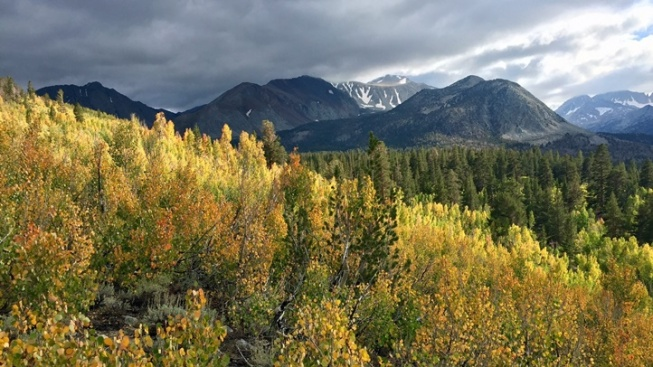 Study Up Time: Mono County Fall Color Guide