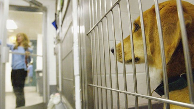 Dog Flu Reported in San Diego County