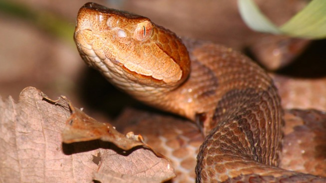 Snake Slithers Out of ATM as Man Makes Withdrawal