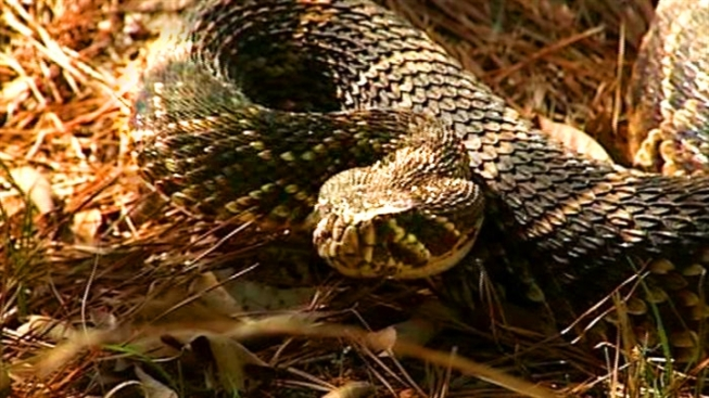 Stray Snake Sabotages Substation
