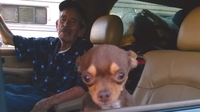 Beloved Chihuahua Stolen From 87-Year-Old Grandfather