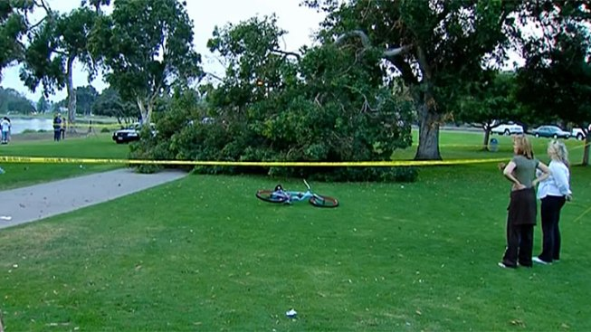 Tree Falls on Woman near Mission Bay