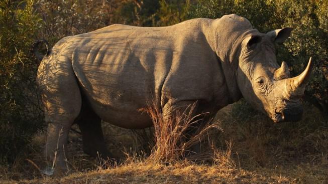 Safari Park Home to Extinct Rhinos