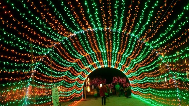 WildLights: Living Desert's Glowful Celebration