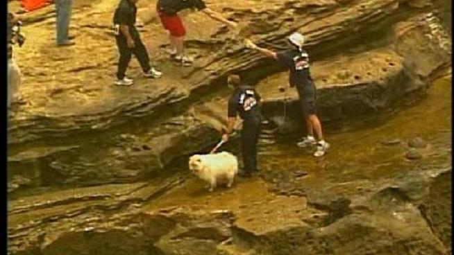 Lifeguards pull a dog from the ledge of one of the cliffs in Point Loma.