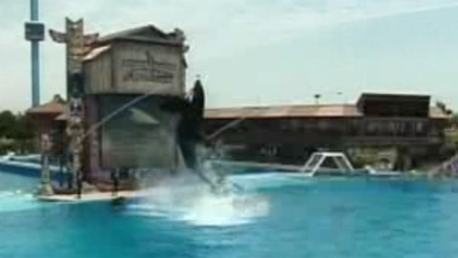 PETA protested Wednesday outside of SeaWorld after an Orca at the park was injured.