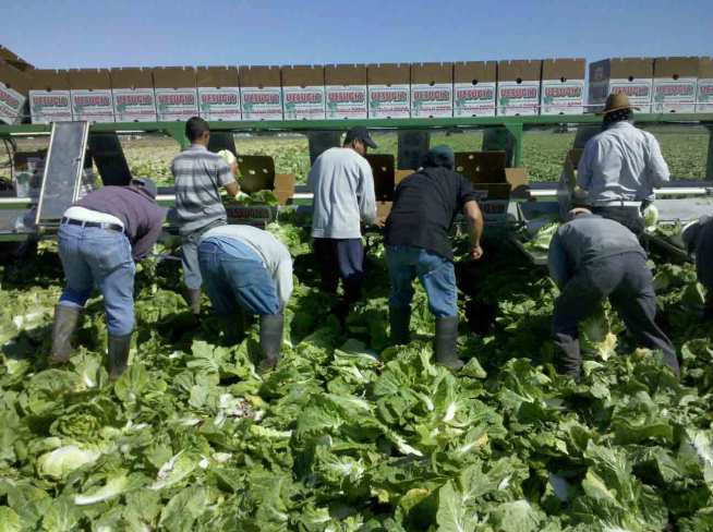 A Day in the Life of a Farmworker