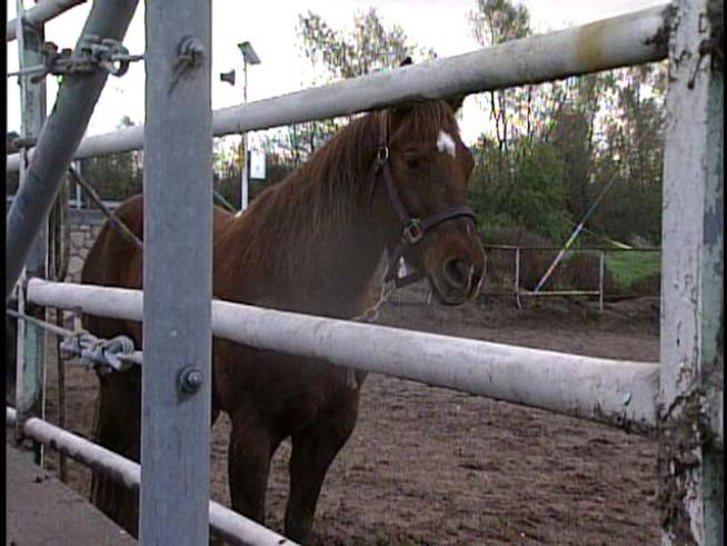 Horses Rescued from Rising Waters